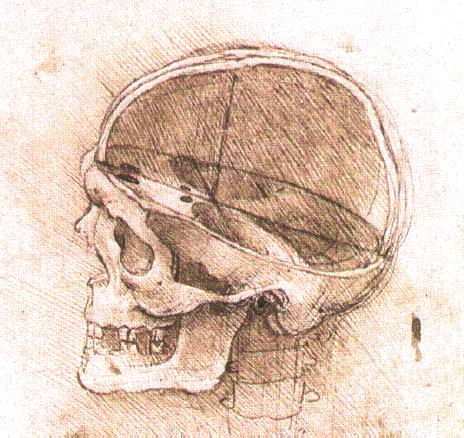 View_of_a_Skull_II