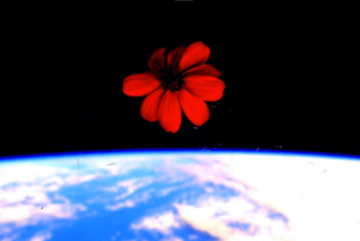 Scott Kelly Flower
